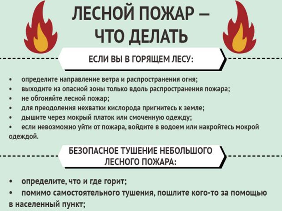 лесной пожар-что делать